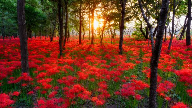 Море цветов (16:9)