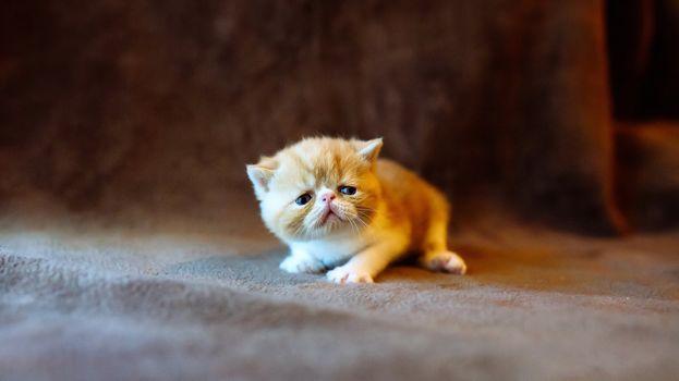 Милейшие котятки (16:9)