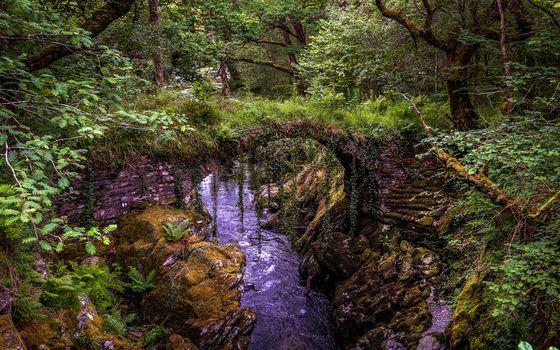 Penman, Snowdonia, forest, trees, bridge, River, rock, landscape