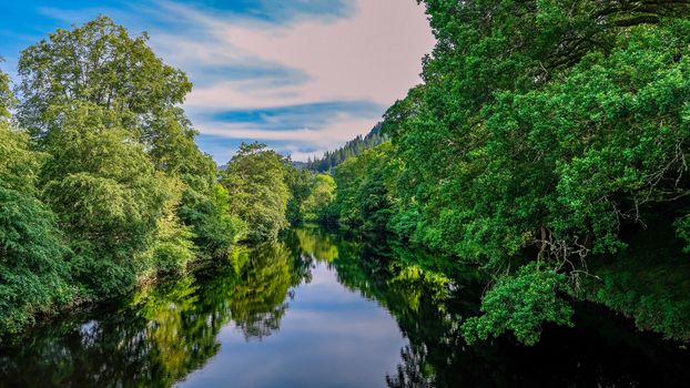forest, trees, River, landscape