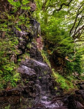forest, trees, rock, waterfall, nature