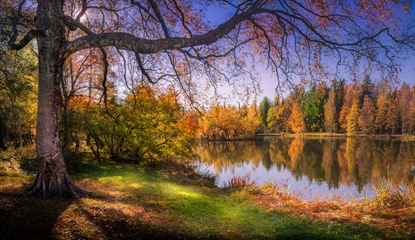 Finland, autumn, lake, forest, trees, landscape