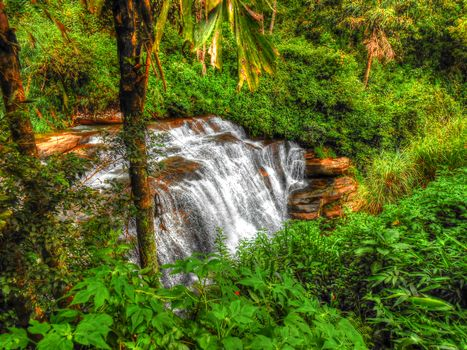 forest, trees, jungle, Sri Lanka, waterfall, landscape