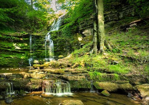 forest, trees, rock, stones, waterfall, landscape