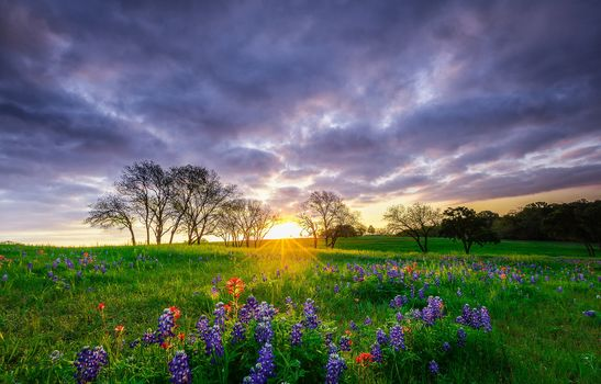 sunset, field, flowers, trees, landscape