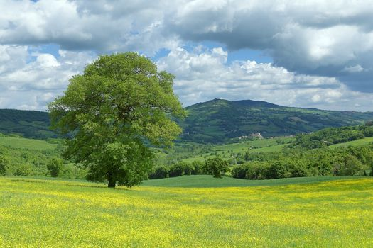 Monte Cerignone, Marks, Italy, field, trees, the mountains, hills, landscape