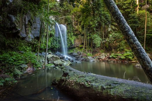 Curtis Falls Mt Tamborine, Queensland, Tamborine National Park, waterfall, forest, trees, rock, nature