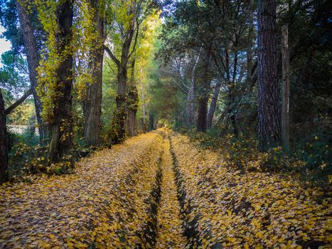 autumn, forest, trees, canvas, road, landscape