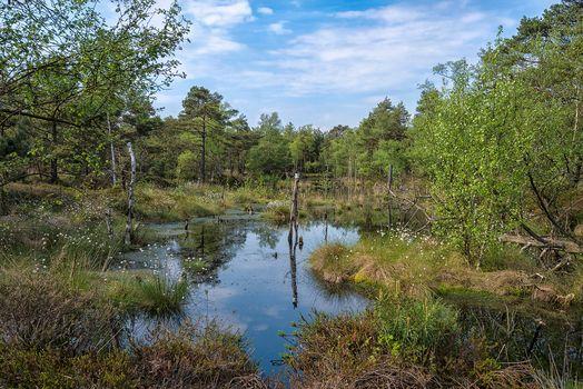 swamp, water, trees, nature