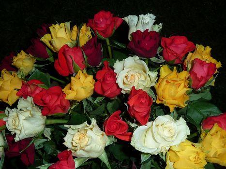 flowers, rose flower, roses, flora, bouquet