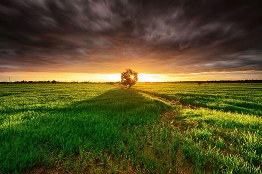 sunset, field, tree, clouds, landscape