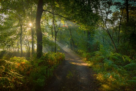 forest, trees, road, Sun rays, landscape