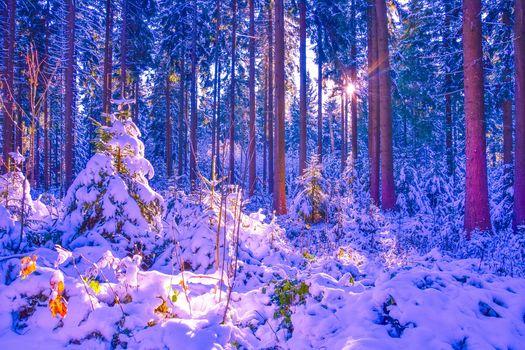 зима, лес, снег, деревья, сугробы, пейзаж