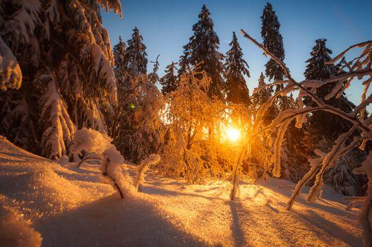 зима, закат, снег, лес, деревья, сугробы, пейзаж
