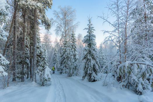 зима, закат, снег, лес, деревья, сугробы, дорога, пейзаж