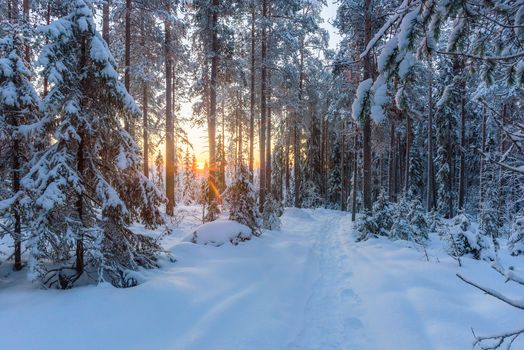 winter, sunset, snow, forest, trees, snowdrifts, path, footprints, landscape