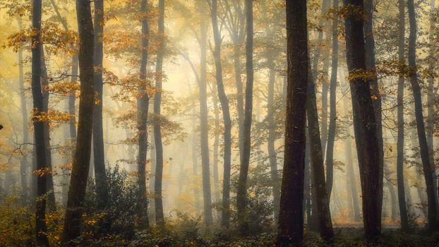 В осеннем лесу (16:9)