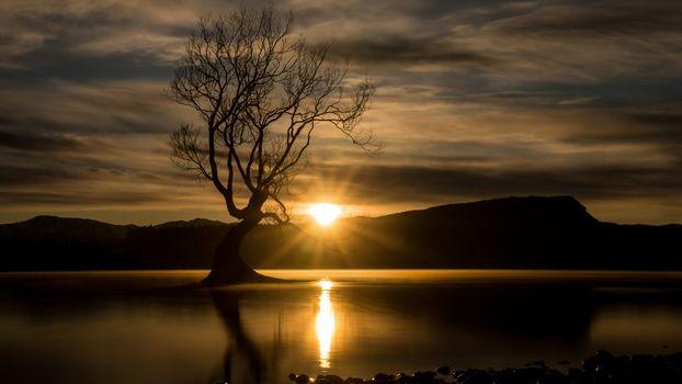 Вода и дерево (16:9)