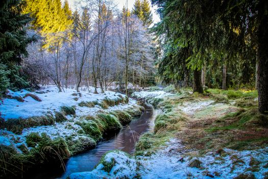 forest, trees, River, nature