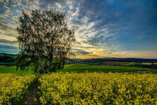 sunset, hills, field, tree, flowers, landscape