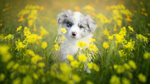 Чудо в жёлтеньких цветах (16:9)