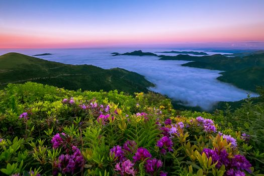 sunset, the mountains, clouds, flowers, landscape