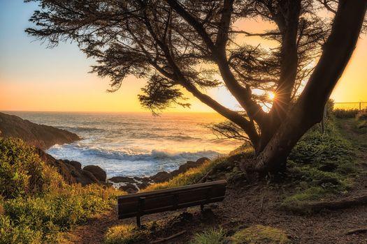 Oregon Coast, sunset, sea, waves, tree, bench, landscape