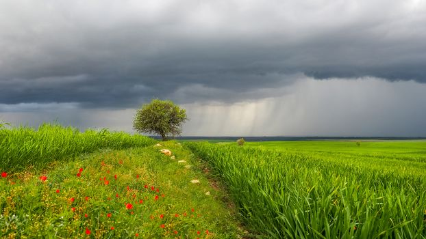 field, tree, clouds, landscape