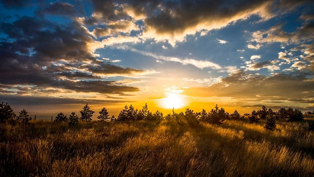 sunset, field, trees, sky, clouds, landscape