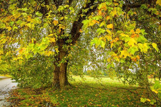 autumn, meadow, road, tree, leaves, landscape