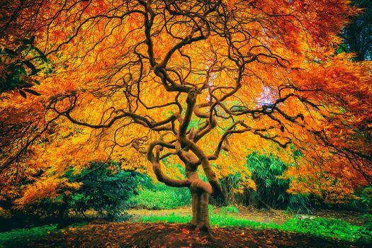 Japanese garden, autumn, tree, leaves, landscape