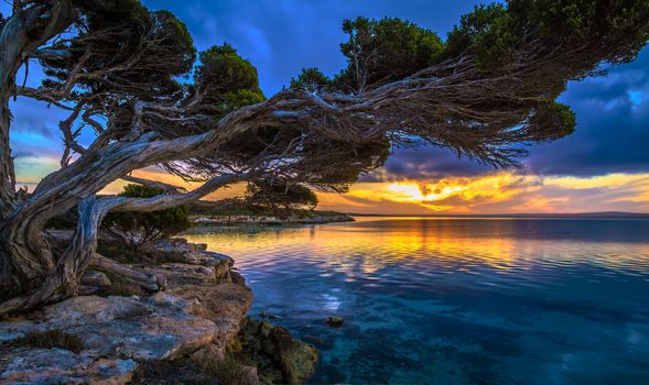 Stranded wood, Coastal plants, Sunset, South Australia, sky, clouds
