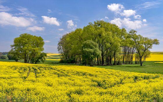 field, trees, flowers, sky, landscape