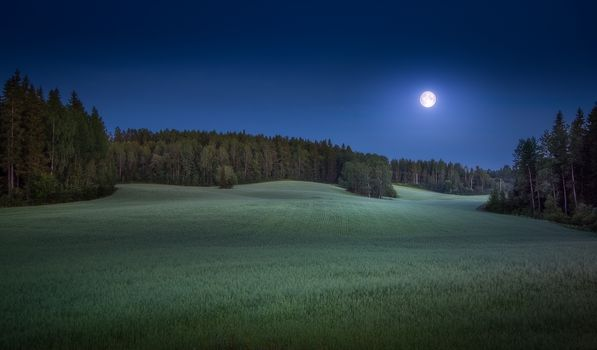 field, moon, forest, trees, night, landscape