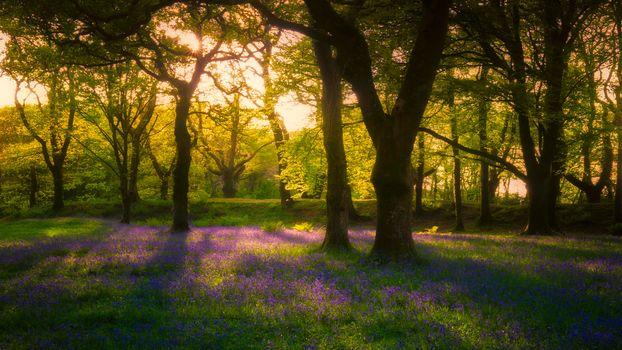 Лесные тайны (16:9)