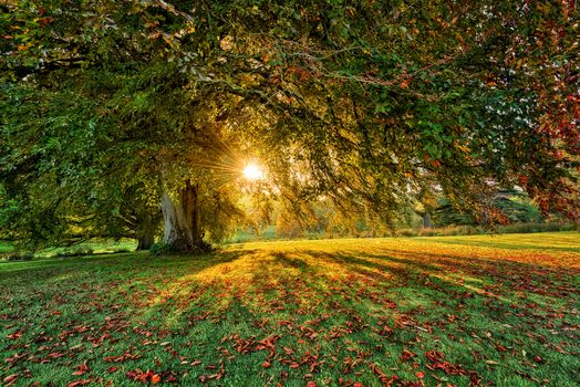 Parkanaur Forest Park Estate, Dungannon, County Tyrone, Northern Ireland, autumn, park, sunset, tree, landscape