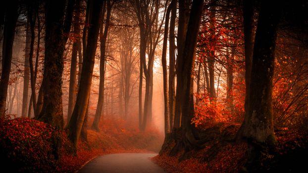 В осеннем лесу - 2 (16:9, 30 шт)