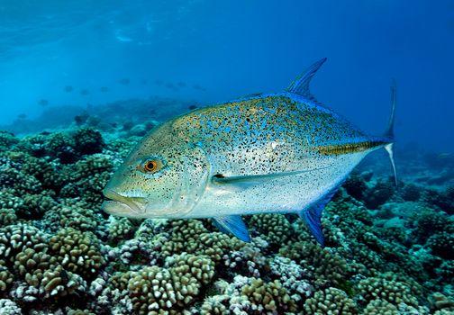 Marine life, sea, sea bottom, water, undersea world, a fish