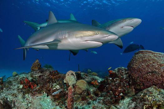Подводный мир - Акулы