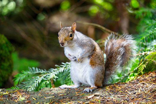 squirrel, sight, animal