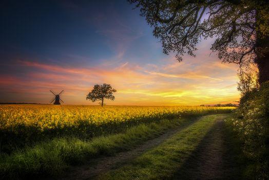 sunset, field, trees, mill, road, flowers, landscape
