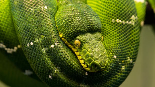 Змей-искуситель (16:9, 30 шт)