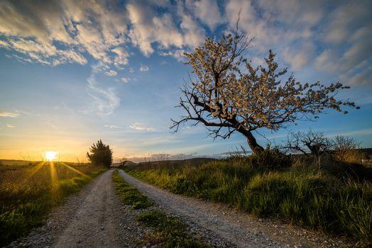 sunset, field, road, tree, landscape