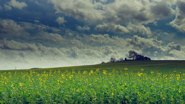 field, hills, flowers, trees, clouds, landscape