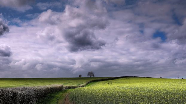 field, flowers, bush, tree, sky, clouds, landscape