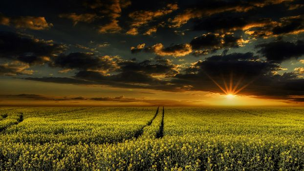 sunset, field, flowers, sky, clouds, landscape