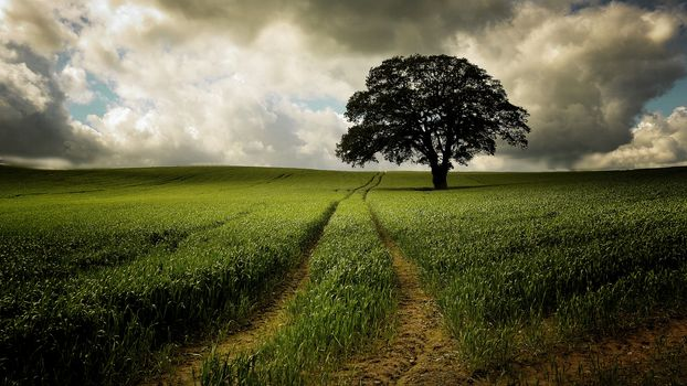 field, grass, tree, sky, landscape, road