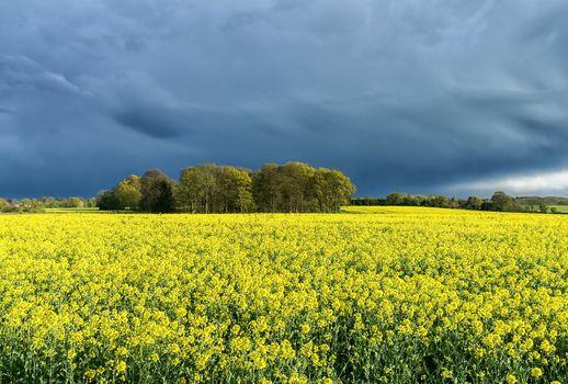field, clouds, trees, flowers, landscape