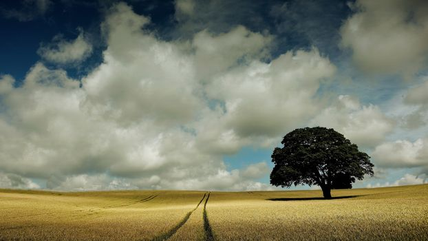 field, sky, clouds, landscape