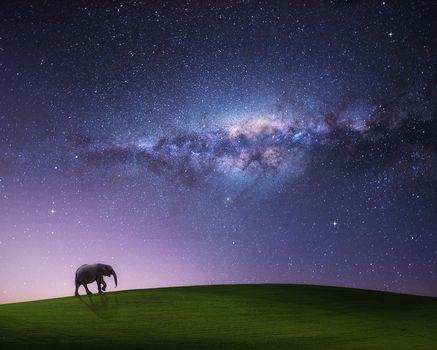 Hill, elephant, radiance, art